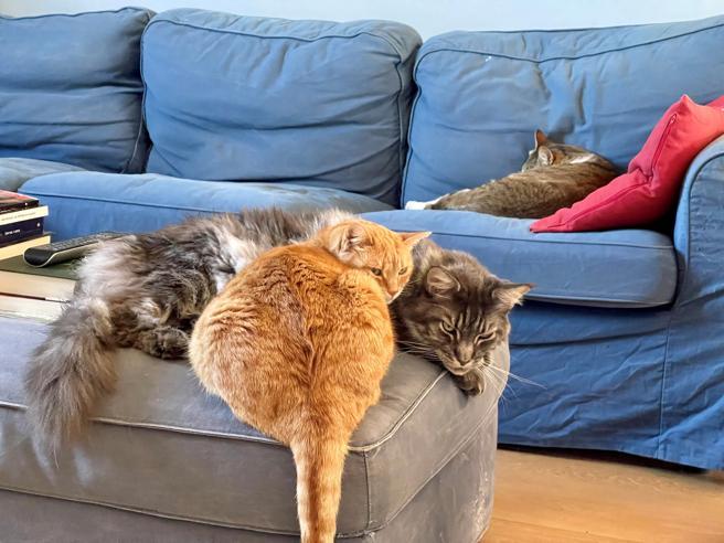 Perché i gatti dormono così tanto? Il ruolo del sonno (e anche l'importanza del gioco)