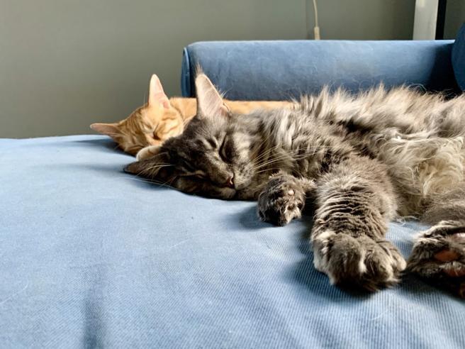 I gatti e la notte: perché i felini sono «animali crepuscolari»
