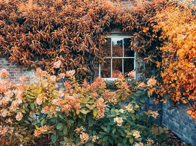I ciclamini contro il tumore e crisantemi per la disabilità: scopri i fiori che fanno bene