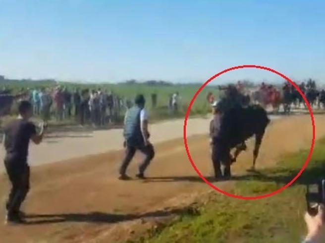 Cavallo travolge e uccide pensionato: la drammatica sequenza durante la «Cavalcata» di Chieuti