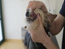 Cani e gatti, l'importanza dell'igiene dentale
