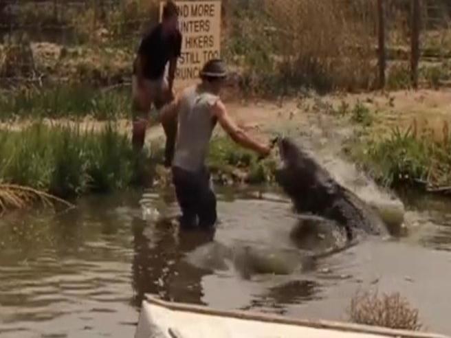Questa diretta poteva costargli un braccio: alligatore di 4 metri attacca la fotocamera