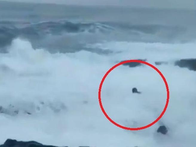 Onda mostruosa trascina il turista in alto mare e lui annega