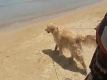 Al mare col cane, spiaggia libera o attrezzata?