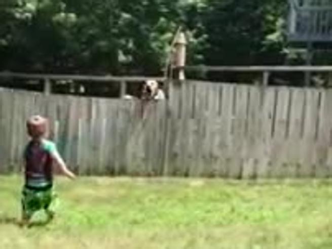 Il bambino e il cane dei vicini: il gioco da una parte all'altra della staccionata