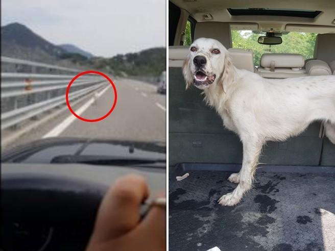 Cane abbandonato in autostrada: ecco come è stato salvato