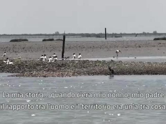 Perché l'Adriatico si riempie di alghe? Troppo azoto nel Po
