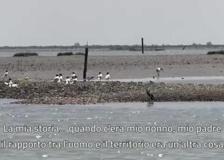Video  ultime notizie - Corriere TV d649f338745