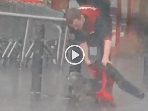 wholesale dealer 13313 55dc3 Cane sotto la pioggia, ragazzo lo copre con la sua giacca