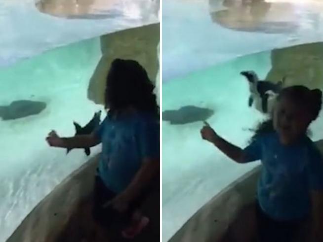 Il pinguino che gioca a rincorrersi con la bimba allo zoo