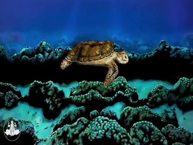 La tartaruga diventa una donna, l'incredibile illusione ottica dell'artista è virale