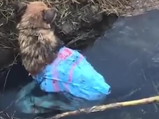 Un cane legato e chiuso un sacco viene gettato in un canale: un passante lo salva