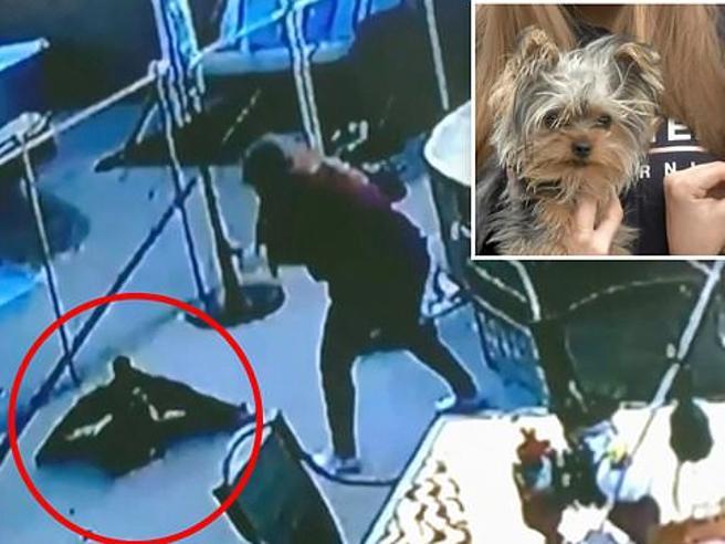 Il cagnolino è aggredito dal falco, ma arriva la padrona e ecco cosa succede