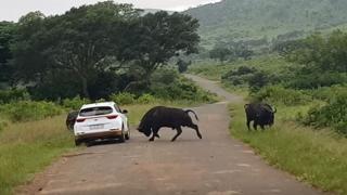 siti di incontri di bufali gratuiti il ragazzo datazione asspocalise ora