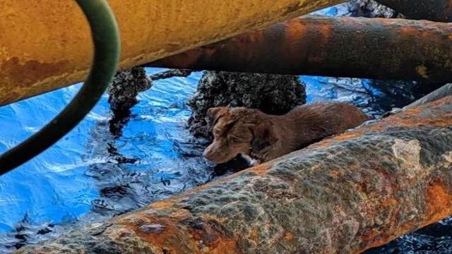 Il cane salvato in mare dagli operai di una piattaforma petrolifera (a 220  km dalla costa)