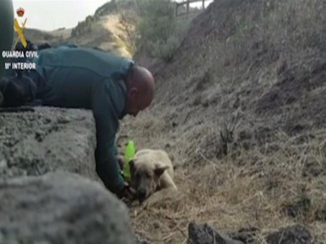 Cane salvato dalle fiamme nell'inferno di Gran Canaria: le coccole del poliziotto