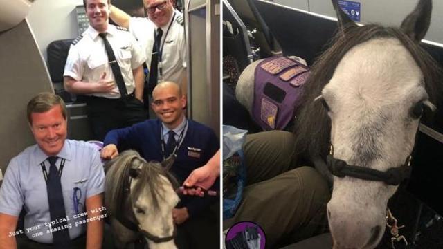 Sale sull`aereo con il suo cavallo, la compagnia aerea lo permette per ragioni di salute.