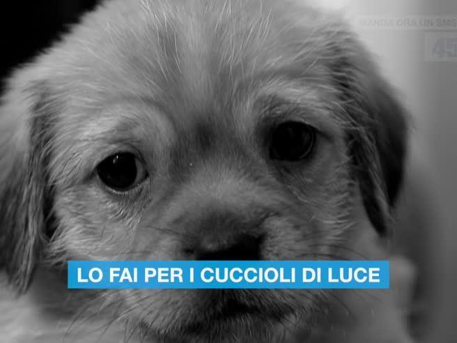 «Salvami subito»: un sms per i cuccioli abbandonati
