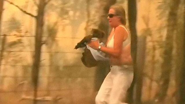Risultati immagini per Australia, donna corre nel bosco in fiamme per salvare un koala dall'incendio