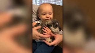 Il video più dolce della giornata: il cucciolo  fa smettere di piangere il bebè