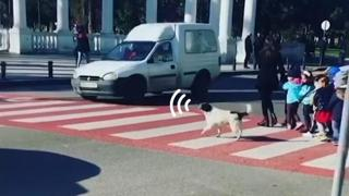 Il cane-vigile urbano che aiuta i bimbi ad attraversare sulle strisce