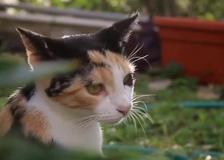 Giornata del gatto, ma le istituzioni cosa fanno?