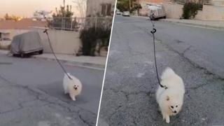 A Cipro c'è chi porta fuori il cane così