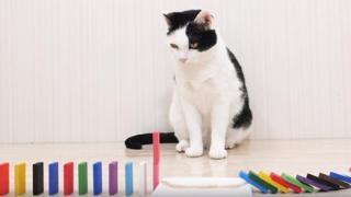 Gatti alle prese con le tesserine del Domino: il video da milioni di clic