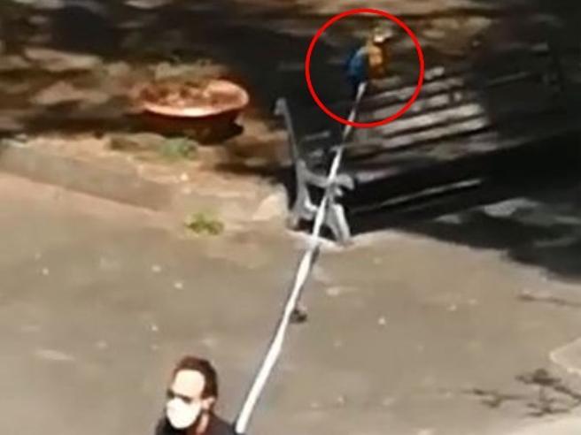 Angri, in giro col pappagallo al guinzaglio. E ai carabinieri consegna anche l'autocertificazione