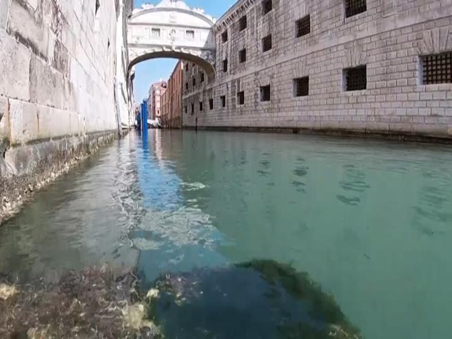 Dalle meduse ai fondali, ora nei canali di Venezia si vede ogni ...