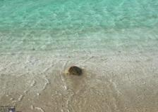Sardegna, tartaruga torna in mare dopo due mesi di cure