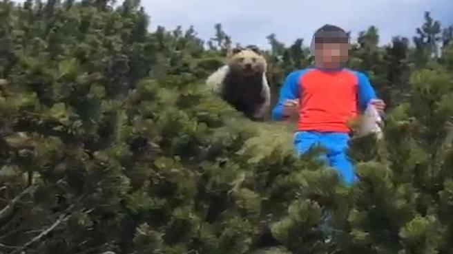 In Trentino spunta un orso alle spalle del bambino (che non perde la calma)