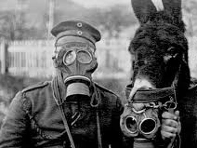 «La strage degli animali nella Prima Guerra Mondiale»: eroi dimenticati e compagni fedeli