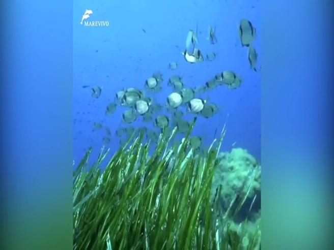 «Il mare al tempo del Coronavirus», 100 ore di immersioni e oltre 300 di registrazioni sonore