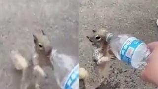 Scoiattolo implora un bambino per avere dell'acqua: «È assetato»