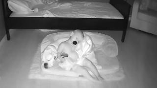 Il bambino preferisce la compagnia del cane alla comodità del letto