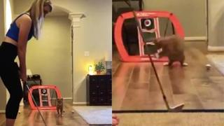 Il gatto è un prodigio in «porta»: il video da milioni di view