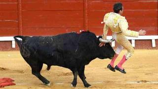 In Spagna torna la corrida: il torero finisce incornato ma si salva