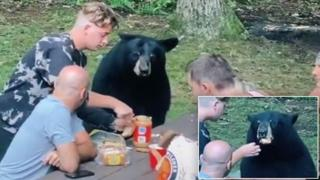 Picnic (e selfie) con l'orso nero goloso di burro d'arachidi