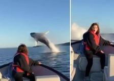 Canada, lo spettacolo delle balene: saltano fuori dall'acqua e lasciano a bocca aperta la ragazza in barca
