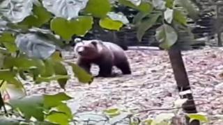 Trentino: c'è un orso nell'orto