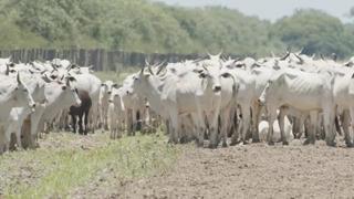 L'import di pelli e la perdita di foreste in Sud America. «Italia porta dell'Europa»