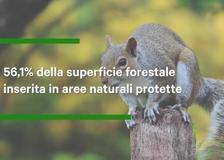 Legambiente: «La bioeconomia delle foreste deve essere un pilastro del Recovery Plan Italiano»
