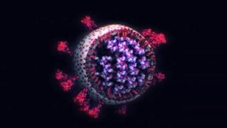 Com'è fatto davvero il coronavirus: la foto  in 3D lo mostra nei minimi dettagli