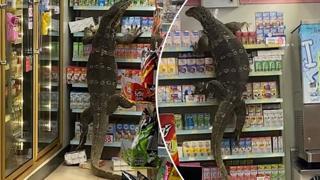 Thailandia, sorpresa in un supermercato: un varano entra e si arrampica sugli scaffali