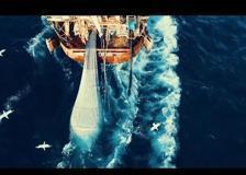 «Seaspiracy», un documentario tra emozione e senso di colpa