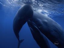 I segreti di balene, orche, capodogli: amore e famiglia prima di tutto