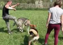 Addestratore prende a calci un cane: «So sempre dove toccarti, ricordatelo», il video