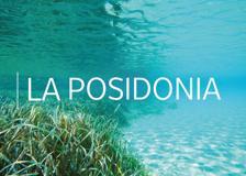 Posidonia, quella verde prateria che scambiamo per alghe può salvare gli oceani