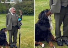 In Irlanda un cucciolo di bovaro bernese ruba la scena al presidente Higgins: coccole e carezze in Tv